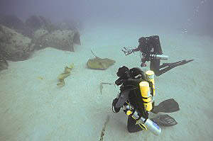 Atlantic Stingray, Green Moray and divers, photo by Sam Clemens